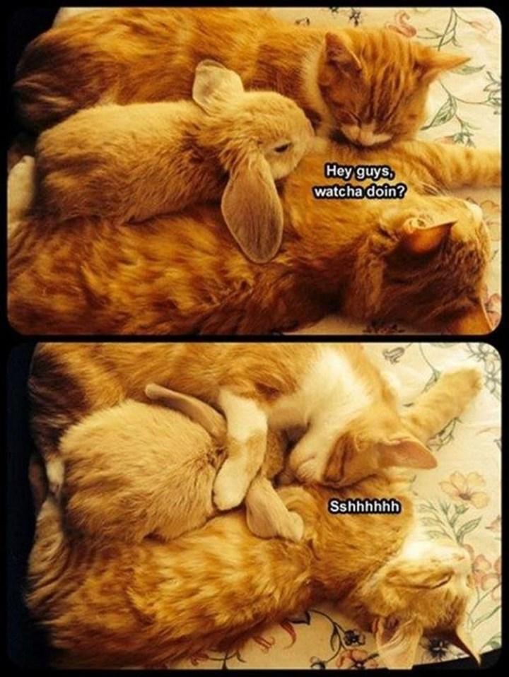 "27 Funny Animal Memes - ""Hey guys, whatcha doin? Sshhhhhh."""