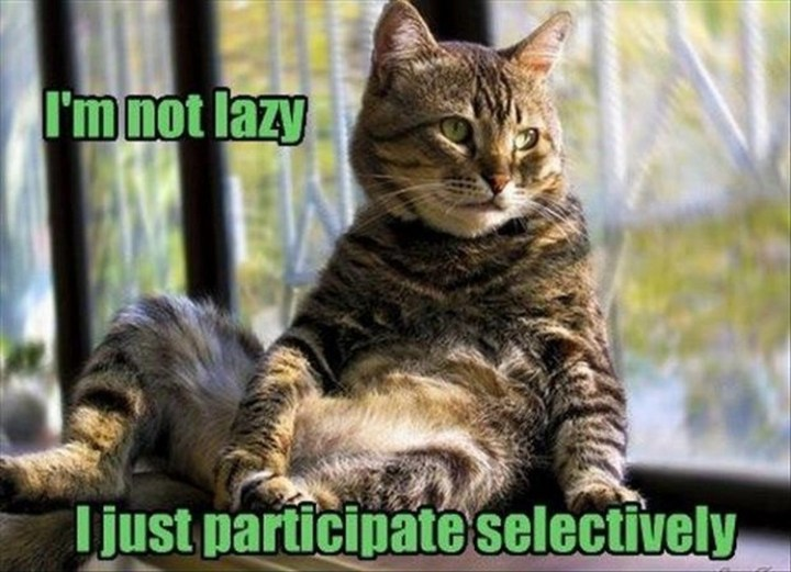 """27 Funny Animal Memes - """"I'm not lazy, I just participate selectively."""""""