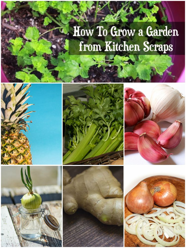 Top 6 Kitchen Scraps You Can Use to Grow a Vegetable Garden.