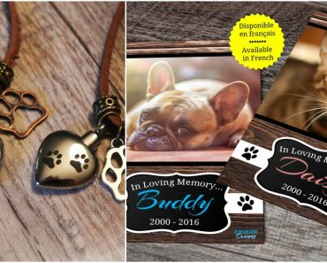 9 Pet Memorial Ideas to Honor a Beloved Pet That Has Passed Away.