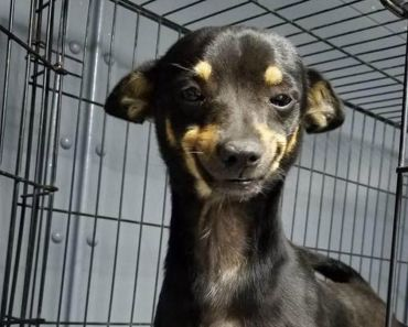 Cheech the Shelter Dog's Cute Smile Leads to Quick Adoption.