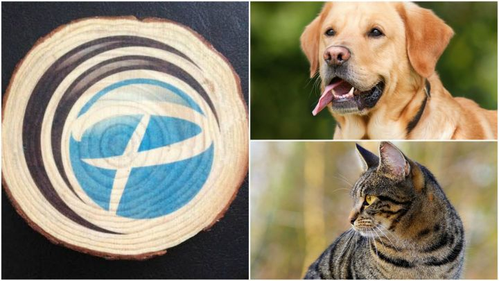 9 Pet Memorial Gifts - Transfer your pet's photo on wood with photo wood plaque coasters.