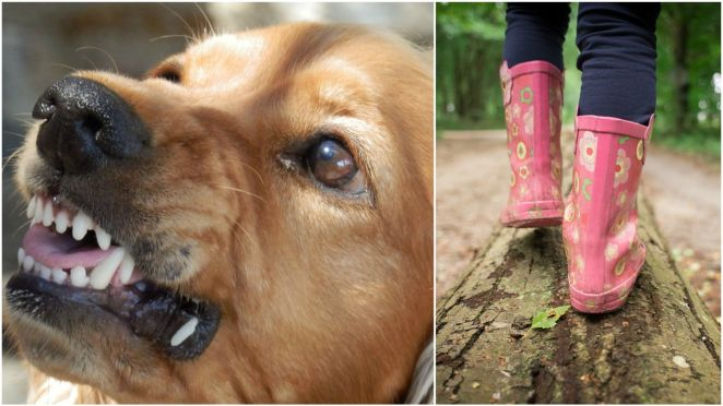 Attempted Abduction of 10-Year-Old Girl Foiled Thanks to Her Brave Dog.
