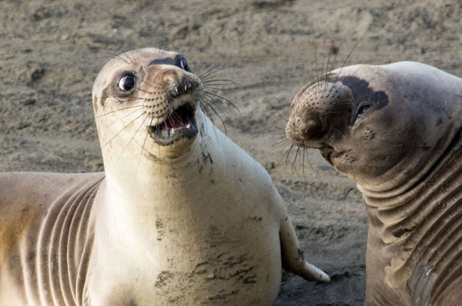 """2017 Comedy Wildlife Photography Award Winners - Highly Commended """"WTF"""" By George Cathcart."""