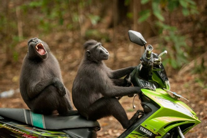 """2017 Comedy Wildlife Photography Award Winners - Highly Commended """"Monkey-Escape"""" By Katy Laveck-Foster."""