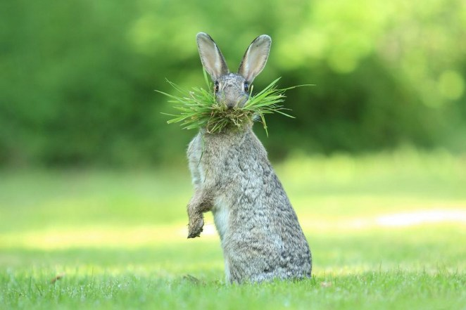 """2017 Comedy Wildlife Photography Award Winners - Highly Commended """"Eh What's Up Doc?"""" By Olivier Colle."""