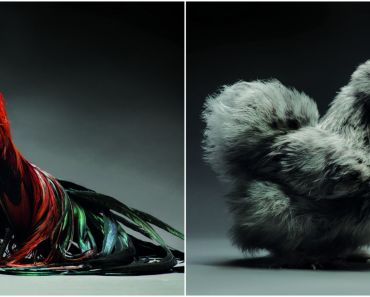 Two Amazing Photographers Take Pictures of Chickens