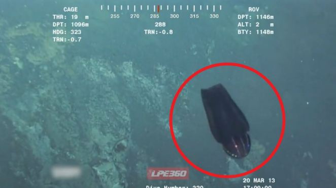 Divers Find Alien-Like Sea Creature with a Colorful Disco Ball Head.