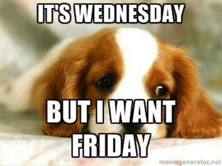"15 Funny Wednesday Memes - ""It's Wednesday but I want Friday."""