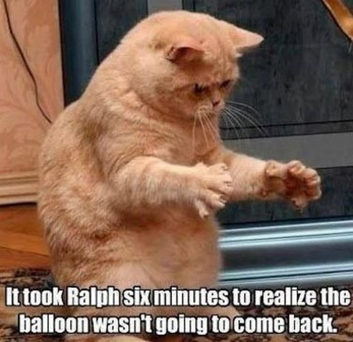 Image of: Tweets 55 Funny Cat Memes Winkgo 55 Funniest Cat Memes Ever Will Make You Laugh Right Meow