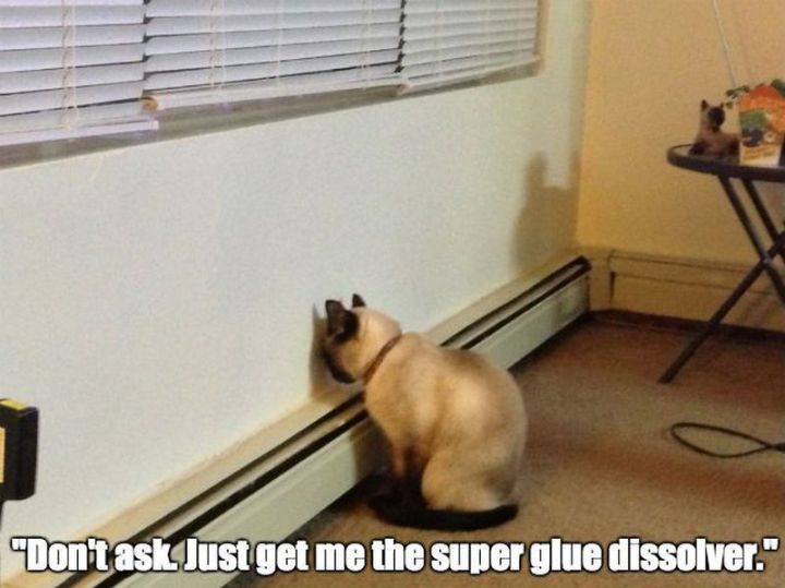 "55 Funny Cat Memes - ""Don't ask. Just get me the super glue dissolver."""