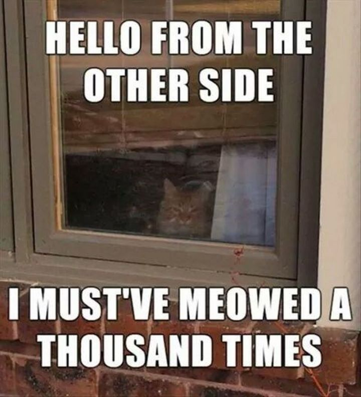 "55 Funny Cat Memes - ""Hello from the other side. I must've meowed a thousand times."""
