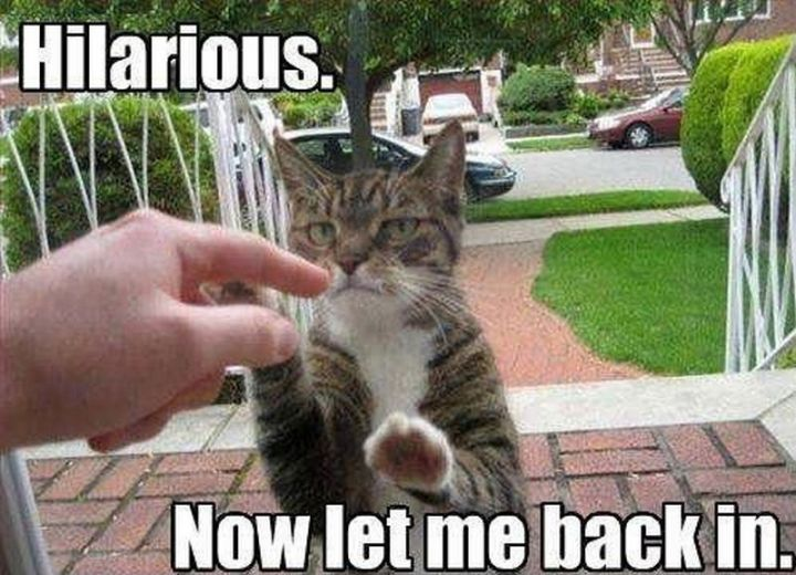 "55 Funny Cat Memes - ""Hilarious. Now let me back in."""