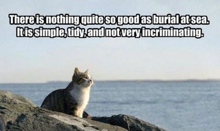 "55 Funny Cat Memes - ""There is nothing quite as good as burial at sea. It is simple, tidy, and not very incriminating."""