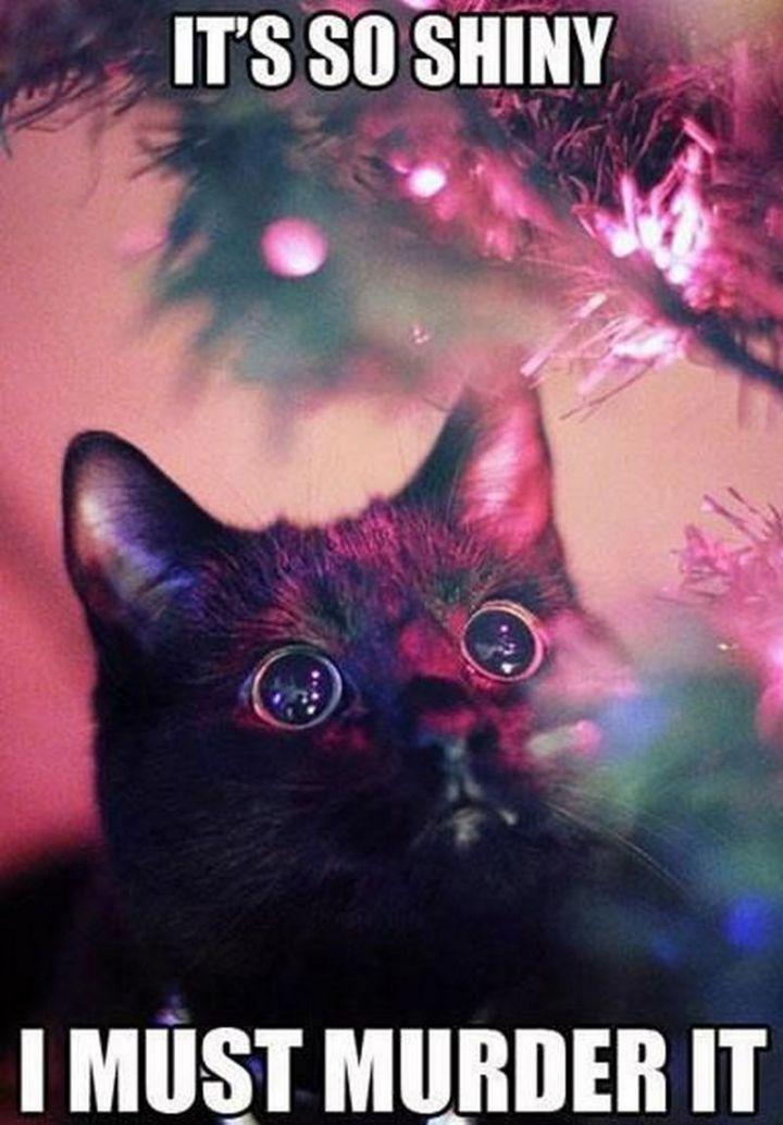 "55 Funny Cat Memes - ""It's so shiny. I must murder it."""
