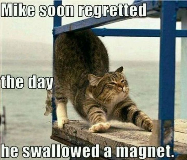 "55 Funny Cat Memes - ""Mike soon regretted the day he swallowed a magnet."""