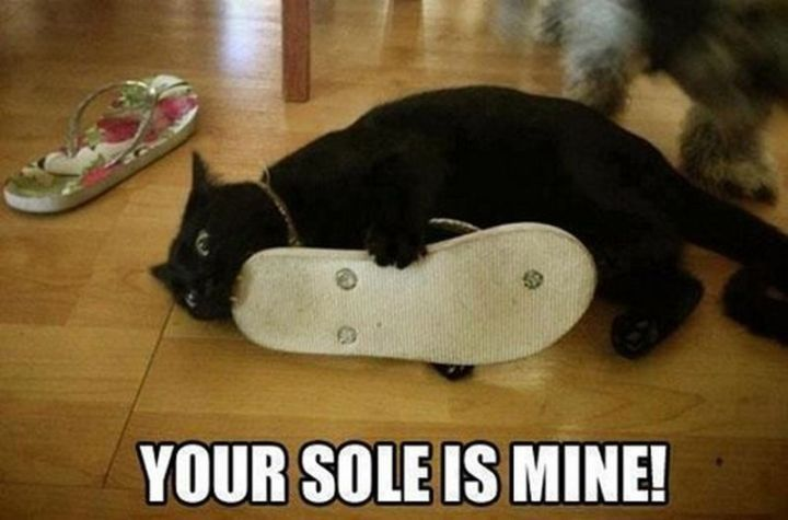 "55 Funny Cat Memes - ""Your sole is mine!"""