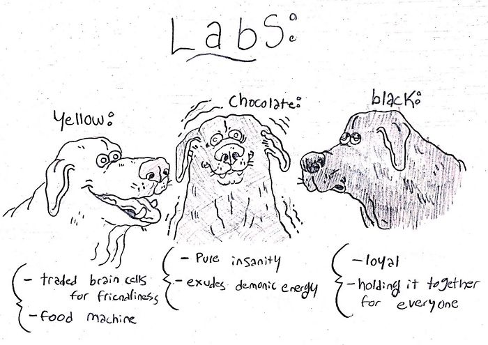 Funny Guide to Dog Breeds - Labs.