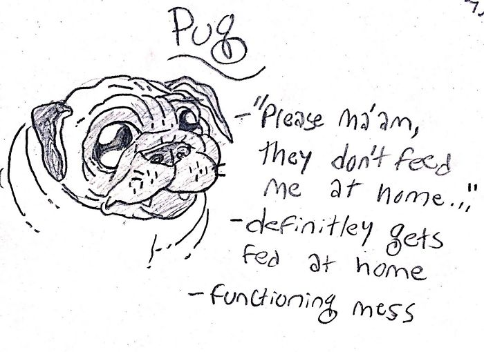 Funny Guide to Dog Breeds - Pug.