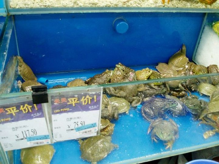 15 Items Sold at Walmart Stores in China - Live turtles and frogs.