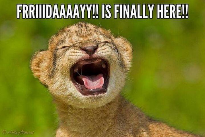 """27 Funny Friday Memes - """"Frriiidaaaayy!! Is finally here!!"""""""