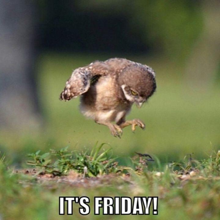 """27 Funny Friday Memes - """"It's Friday!"""""""