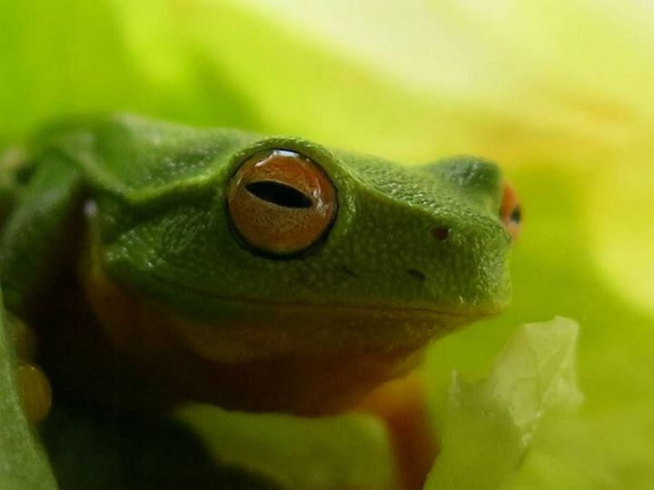 Does this tree frog have a smug look on his face or is it just me? What a cute little guy :)