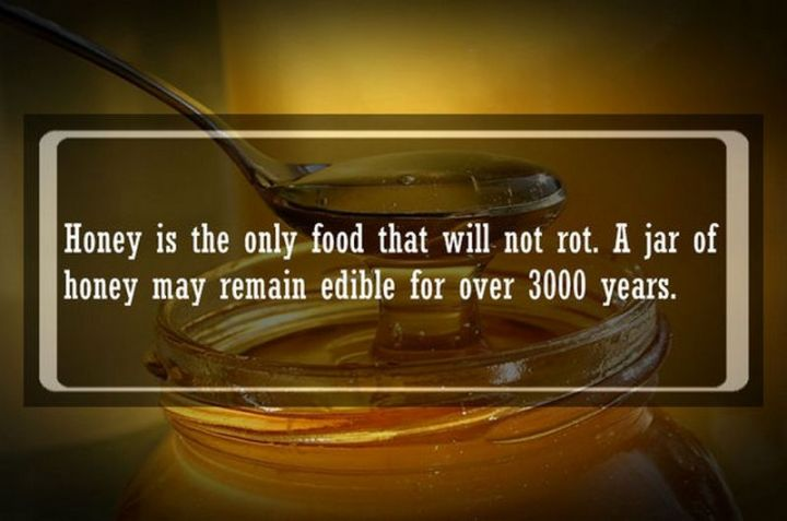 """19 Food Facts - """"Honey is the only food that will not rot. A jarof honey may remain edible for over 3000 years."""""""