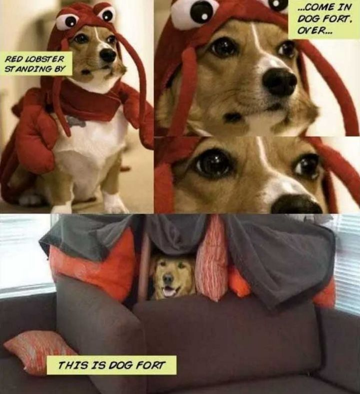 "101 best funny dog memes - ""Red Lobster standing by...come in Dog Fort, over...This is Dog Fort."""