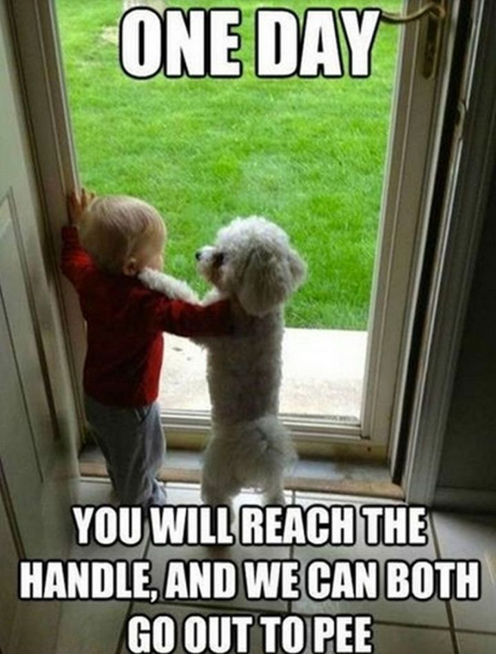 "101 best funny dog memes - ""One day you will reach the handle, and we can both go out to pee."""