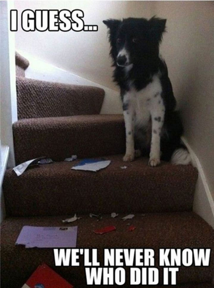 "101 best funny dog memes - ""I guess we'll never know who did it."""