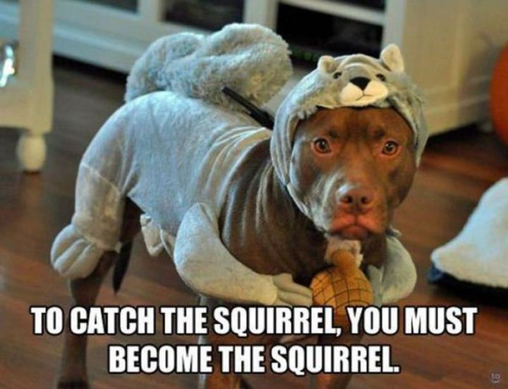 "101 best funny dog memes - ""To catch the squirrel, you must become the squirrel."""