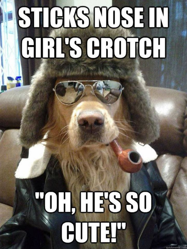 "101 best funny dog memes - ""Sticks nose in girl's crotch. Oh, he's so cute!"""