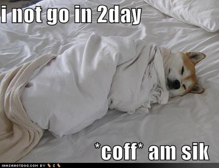 """23 Sick Memes - """"I not go in 2day *coff* am sik."""""""