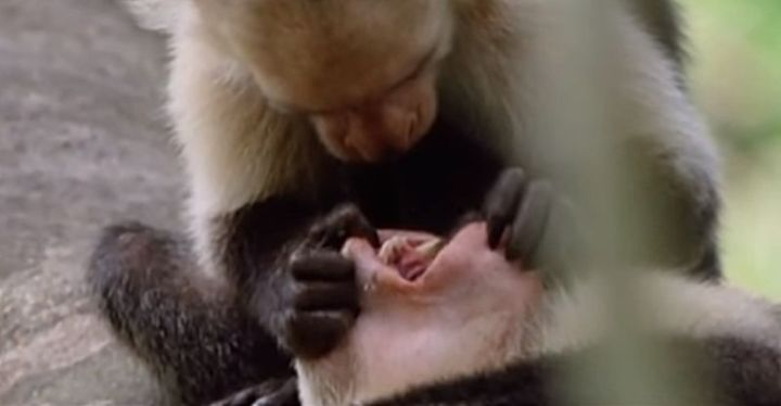 Funny Animal Videos Like This One Are Guaranteed To Crack You Up.