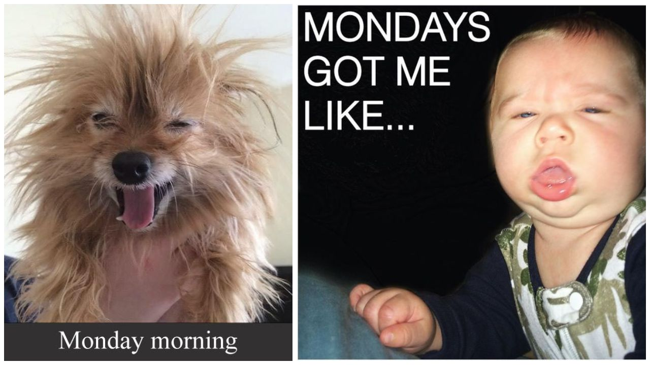 65 Funny Monday Memes to Help You Make It Through the Day