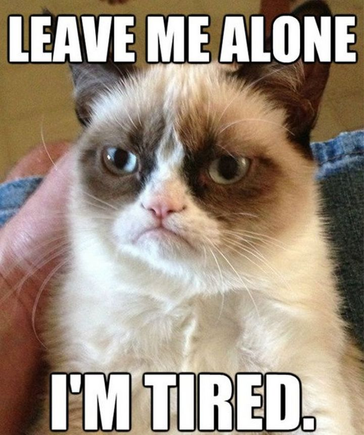 """37 Best Exhausted Memes - """"Leave me alone. I'm tired."""""""