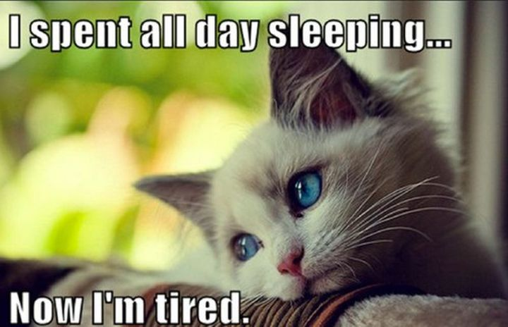 """37 Best Exhausted Memes - """"I spent all day sleeping...now I'm tired."""""""