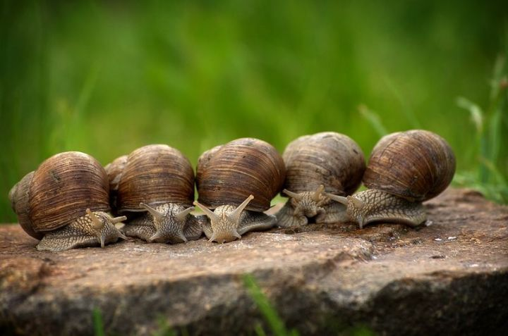 27 Amazing Animal Facts - Snails can sleep for 3 years.