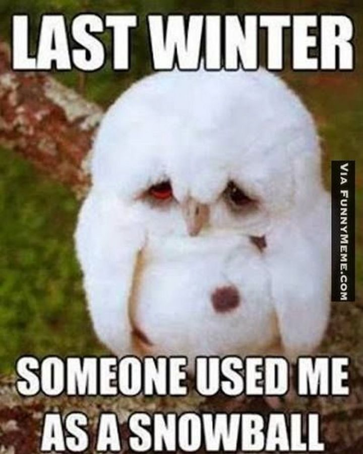 "55 Funny Winter Memes - ""Last winter someone used me as a snowball."""
