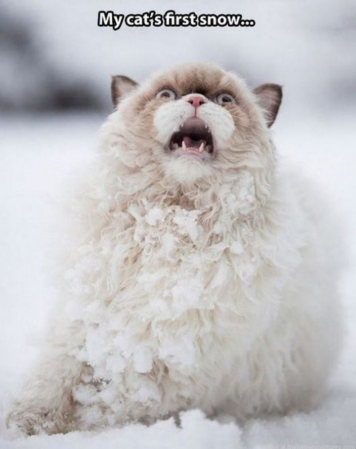 "55 Funny Winter Memes - ""My cat's first snow..."""