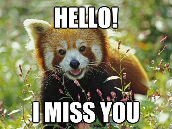 "101 I miss you memes - ""Hello! I miss you."""