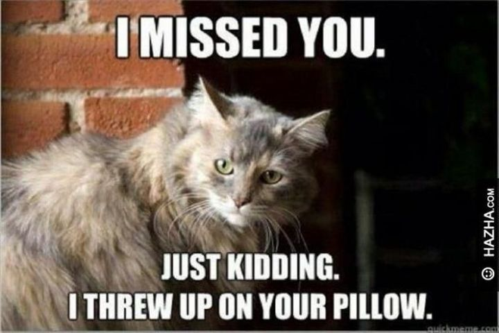 """101 I miss you memes - """"I missed you. Just kidding. I threw up on your pillow."""""""
