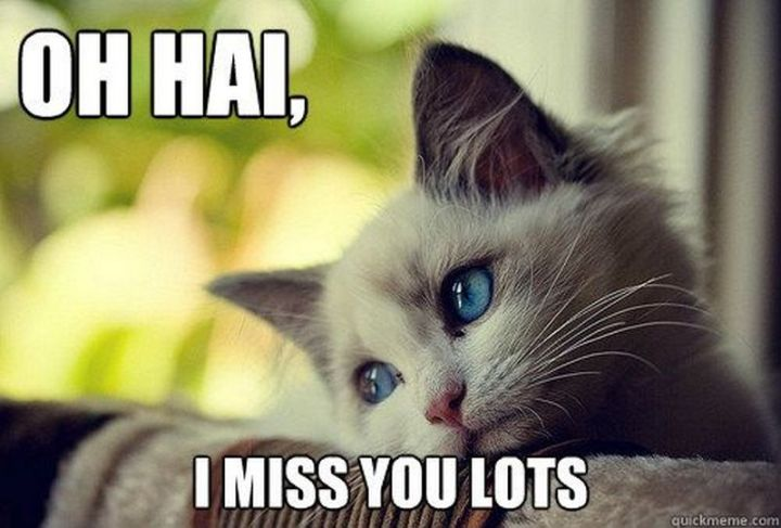 "101 I miss you memes - ""Oh hai, I miss you lots."""