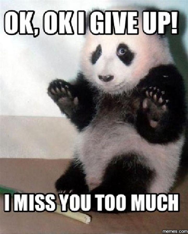"101 I miss you memes - ""OK, OK I give up! I miss you too much."""