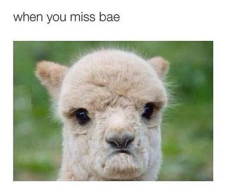 """101 I miss you memes - """"When you miss bae."""""""