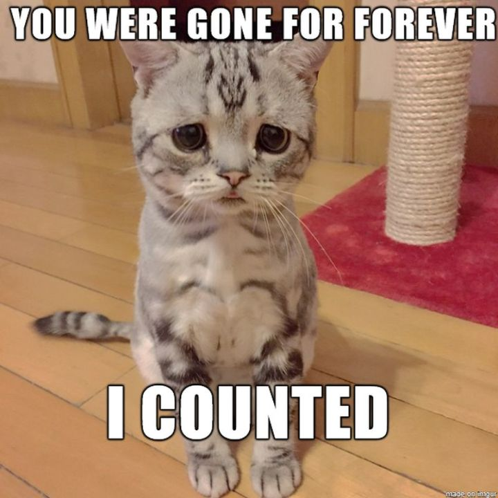 """101 I miss you memes - """"You were gone for forever. I counted."""""""