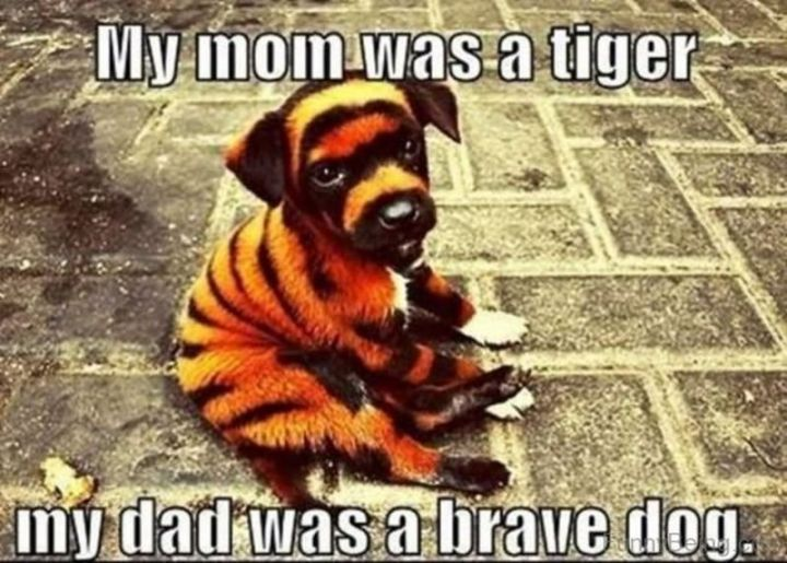 """71 Funny Dad Memes - """"My mom was a tiger. My dad was a brave dog."""