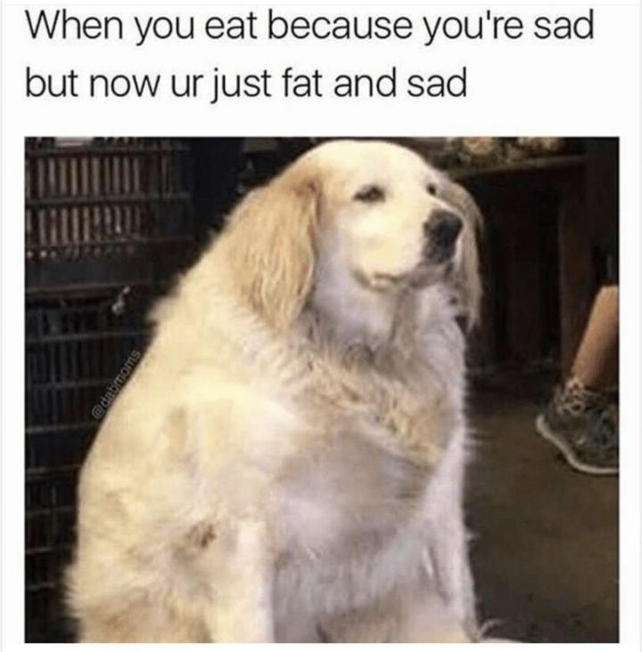 """101 Smile Memes - """"When you eat because you're sad but now ur just fat and sad."""""""
