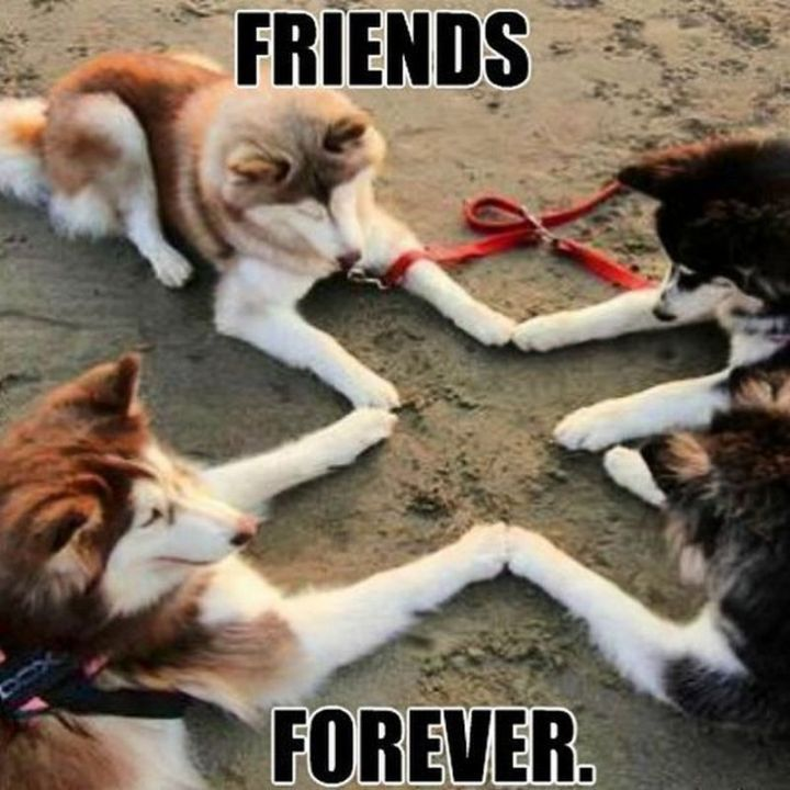 "65 Funny Friend Memes - ""Friends forever."""